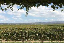 Argentina Wine Tours