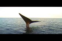 Bottazzi Whale Watch Puerto Piramide