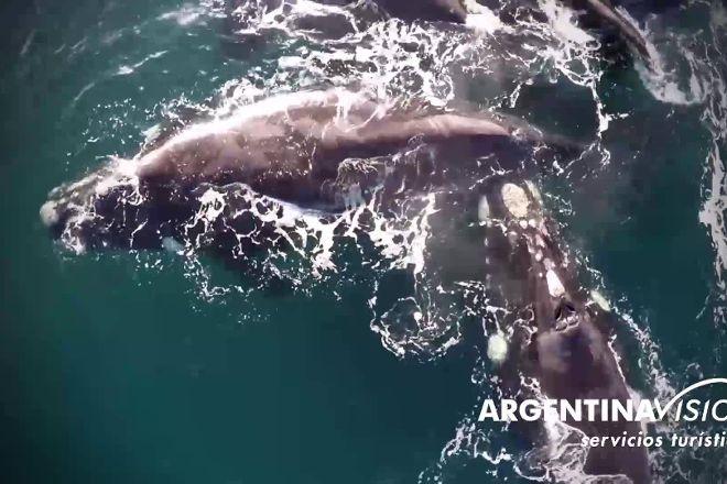 Argentina Vision, Puerto Madryn, Argentina