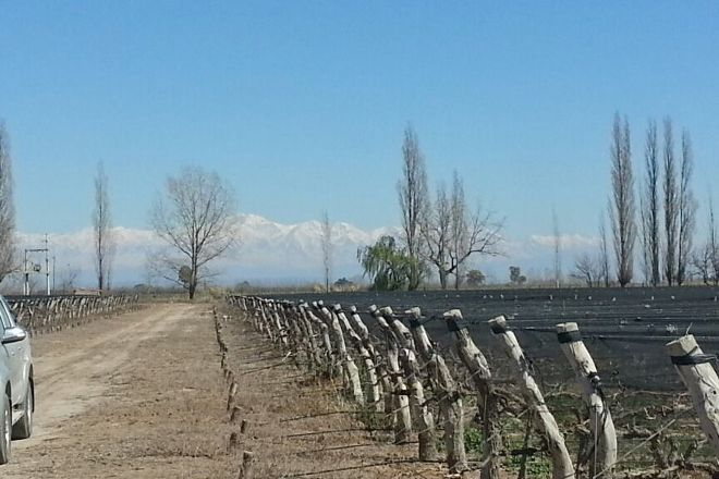 Bodega Lanzarini, Rivadavia, Argentina