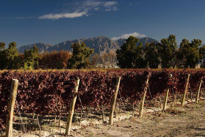 Bodegas Y Vinedos Fabril Alto Verde, Pocito, Argentina