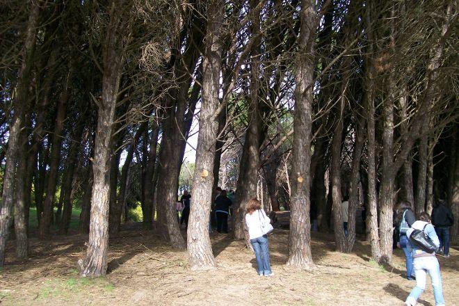 Bosque del Vivero, Miramar, Argentina