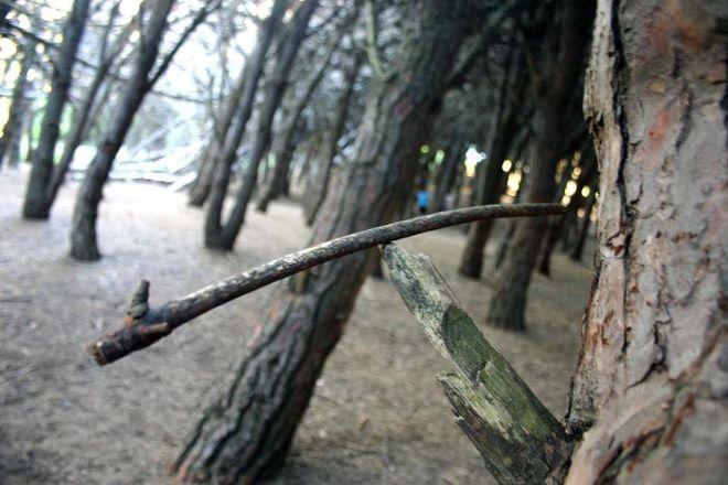 Bosque Energetico, Miramar, Argentina