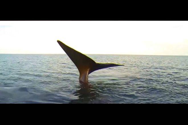 Bottazzi Whale Watch Puerto Piramide, Puerto Madryn, Argentina