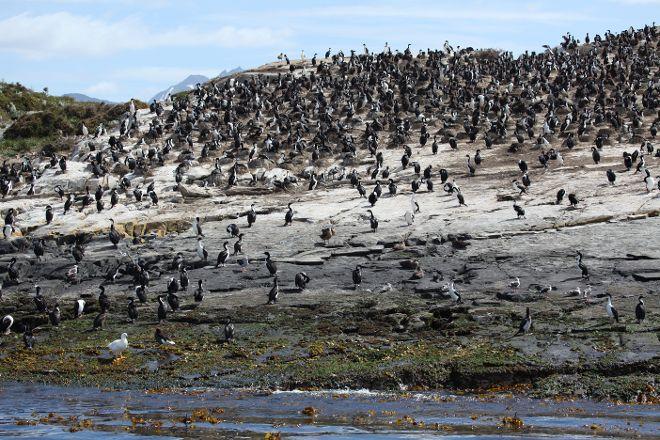 Isla de Los Pajaros, Ushuaia, Argentina