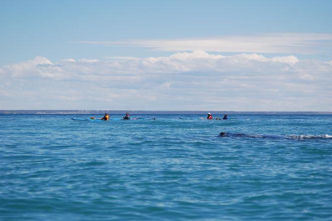 Patagonia Explorers Sea Kayak, Puerto Piramides, Argentina
