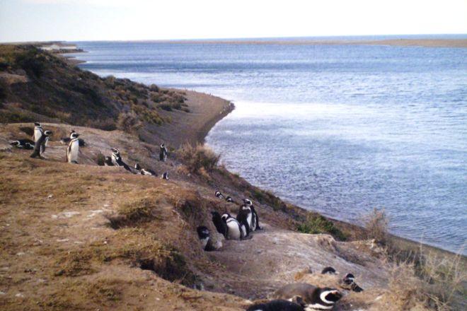 Peninsula Valdes, Puerto Madryn, Argentina