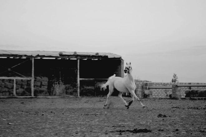 Airudzi Riding Club, Ashtarak, Armenia