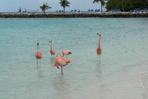 Renaissance Island, Aruba