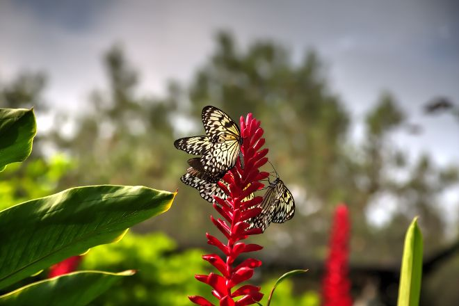 The Butterfly Farm, Oranjestad, Aruba