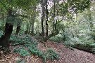 Cathedral of Ferns Walk