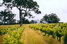 Forest Hill Wines