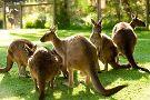 Healesville Sanctuary