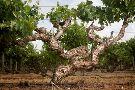 Kaesler Wines and Vineyard