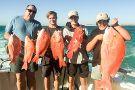 Mahi Mahi Fishing Charter