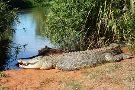 Malcolm Douglas Broome Crocodile Park