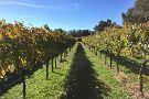 Orange Mountain Wines
