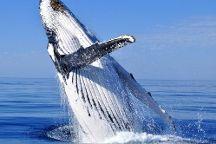 All Sea Charters, Busselton, Australia