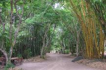 Bamboo Land Nursery & Parklands, Torbanlea, Australia