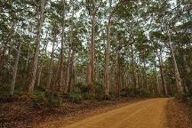 Boranup Karri Forest, Australia Plains, Australia