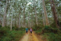 Boranup Karri Forest, Boranup, Australia