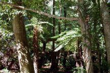 Cathedral of Ferns Walk, Mt Wilson, Australia