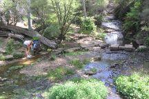 Coachwood Glen Nature Trail, Megalong Valley, Australia