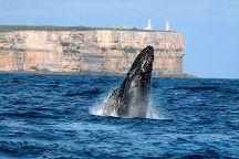 Dolphin Watch Cruises, Huskisson, Australia