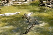 Hartley's Crocodile Adventures, Palm Cove, Australia