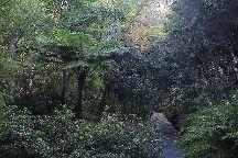 Mount Lofty Botanic Garden, Adelaide, Australia