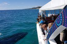 Pacific Whale Foundation Australia, Urangan, Australia