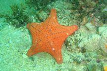 Port Noarlunga Reef, Port Noarlunga, Australia