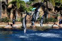 Sea World Theme Park, Main Beach, Australia