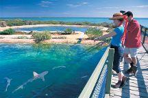 Shark Bay, Denham, Australia