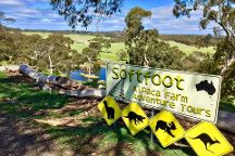 Softfoot Farm, Victor Harbor, Australia