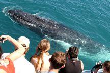 Spirit of Gold Coast Whale Watching, Main Beach, Australia