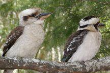 Straddie Kingfisher Tours, Dunwich, Australia