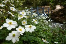 Tamborine Mountain Botanic Gardens, Tamborine Mountain, Australia