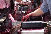 Tamburlaine Organic Wines, Pokolbin, Australia