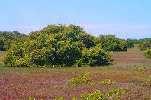 Towra Point Nature Reserve, Kurnell, Australia