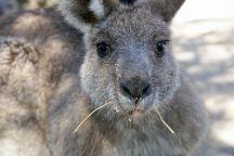 Walkabout Wildlife Sanctuary, Calga, Australia