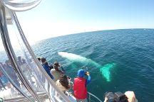 Whales In Paradise, Surfers Paradise, Australia