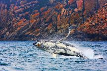 Wineglass Bay Cruises, Coles Bay, Australia
