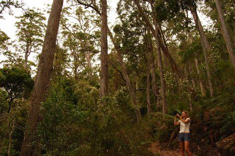 Evercreech Forest Reserve, Mathinna, Australia