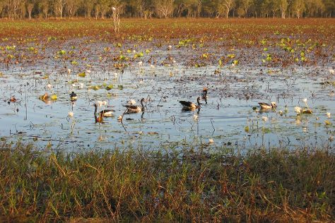 Jabiru (Kakadu National Park)