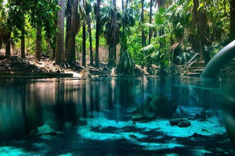 Mataranka Thermal Pool and Rainbow Springs, Mataranka, Australia