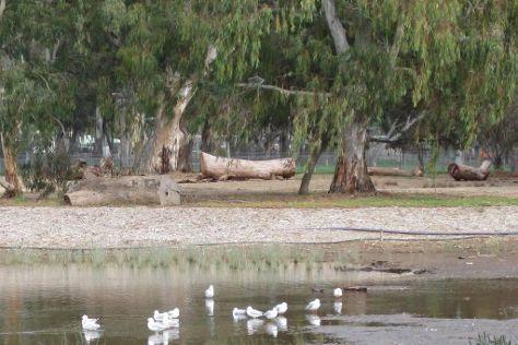 Oaklands Wetland, Oaklands Park, Australia