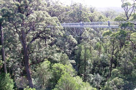 Tree Top Walk, Walpole, Australia