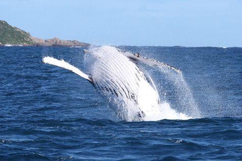 Whale Watch Western Australia, Western Australia, Australia