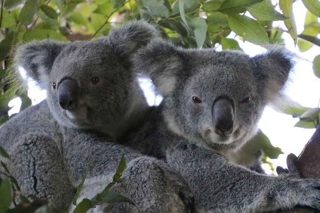 Billabong Zoo: Koala & Wildlife Park, Port Macquarie, Australia